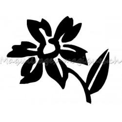 Fleur Jonquille